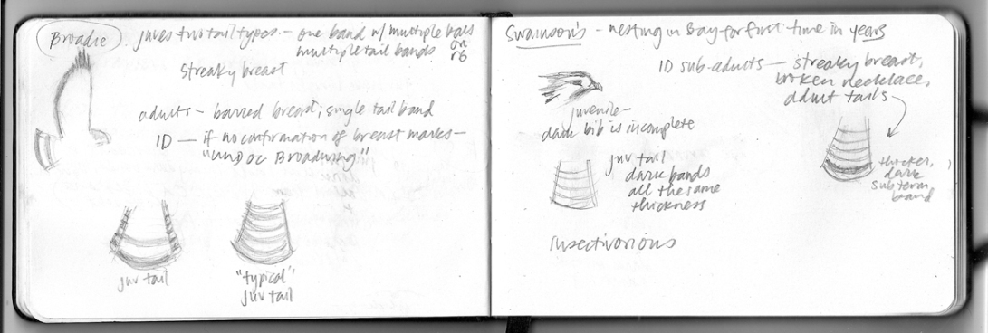 notes from August 30 Advanced Raptor ID class