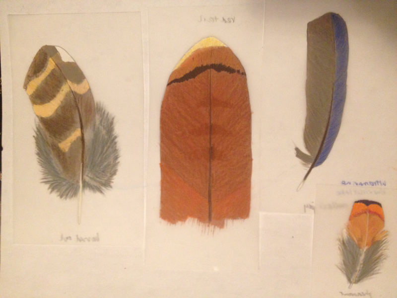 color samples for four species
