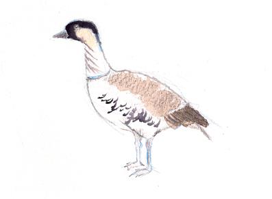 Nene goose, the state bird of Hawai'i